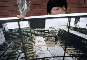 Bosnian Genocide (1992), Relative of the Omarska concentration camp victims near the Western Bosnian town of Prijedor in Bosnia-Herzegovina holds photos of excavated bodies of her relatives on 06 August, 2006.